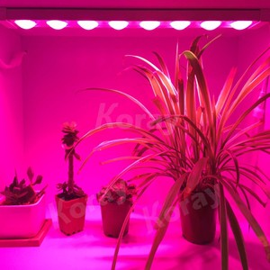 Led grow lights will shine no safe in the basement of seed germination of plant growth lamp