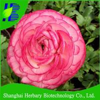High germination perennial plant ranunculus flower seeds