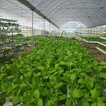 Soilless agriculture and hydroponic growing channel for Soil less farming