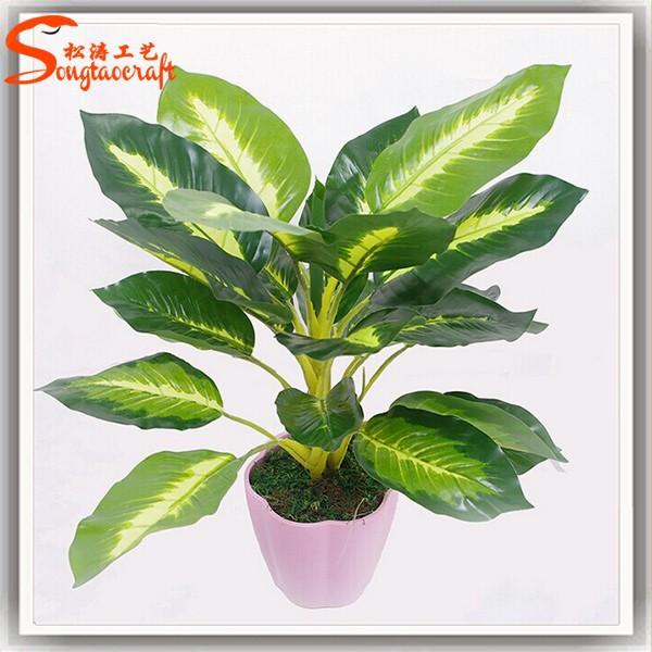 Indoor Decor Cheap Bonsai Plants For Sale Wholesale ...
