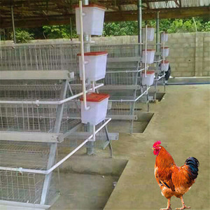 Chicken cages poultry layer cage UAE chicken farm poultry equipment for sale