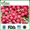 MorFunTech Supply radish seed extract black radish extract supplier for wholesales