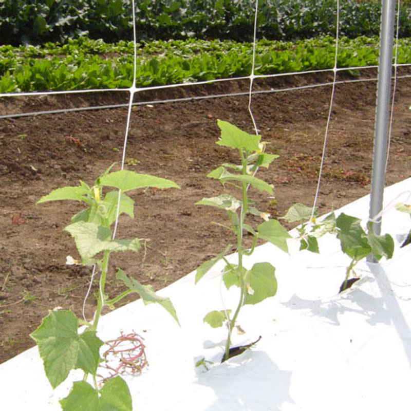 vegetable climbing plant support net for export