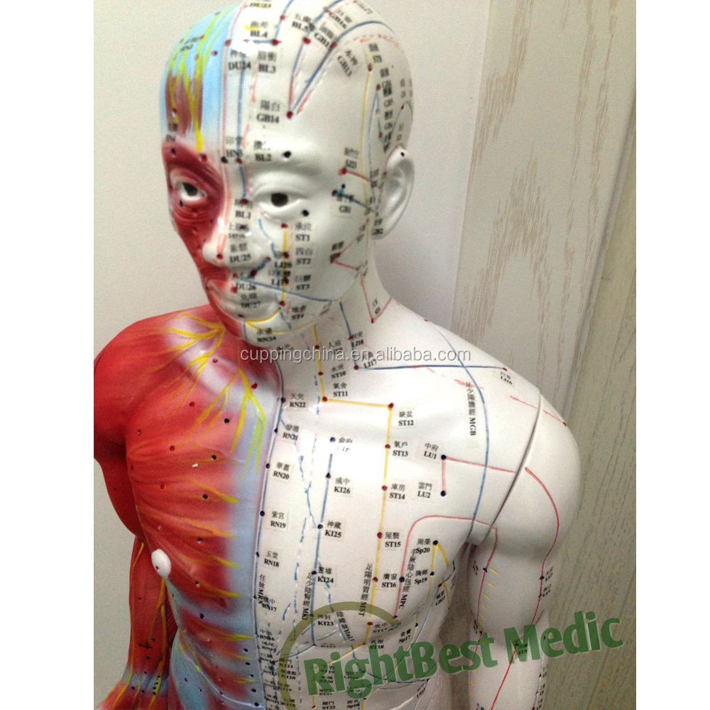 55CM <strong>model</strong> of a human body showing Chinese acupuncture points Male Human Acupuncture Points&amp;Muscle <strong>Model</strong> Acupuncture Poitn <strong>Model</strong>
