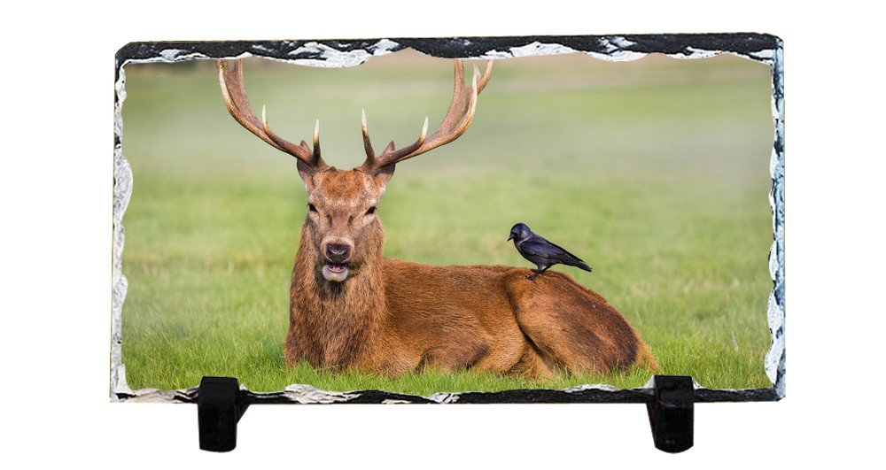 Y.H.X Personalized Picture Frames Photo Rock Slate Deer Photo Plaque Customized Photo Plaque