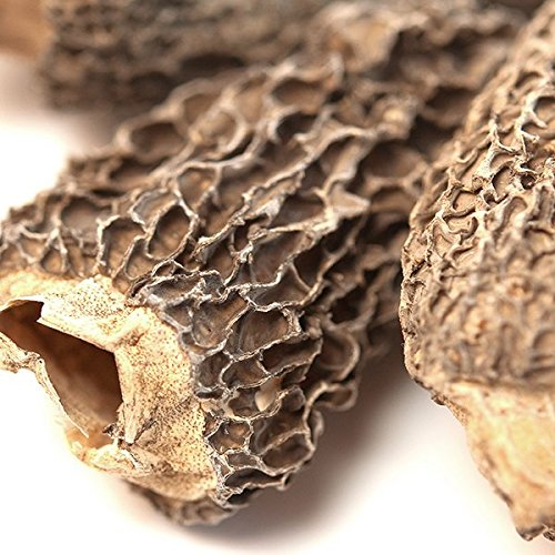 Spice Jungle Morel Mushrooms, Whole (Dried) - 1 oz.