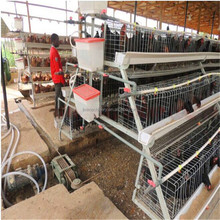 Hot Selling and Popular 10000 Layer Chicken Cage for Sale