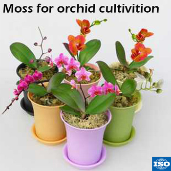 Wholesale Long Fiber Sphagnum Moss For Reptile Beds Terrarium Orchid