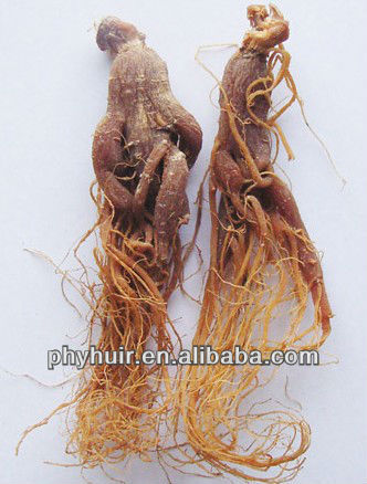 Red Ginseng Root P.E./Root of Panax Ginseng C.A. Meyer
