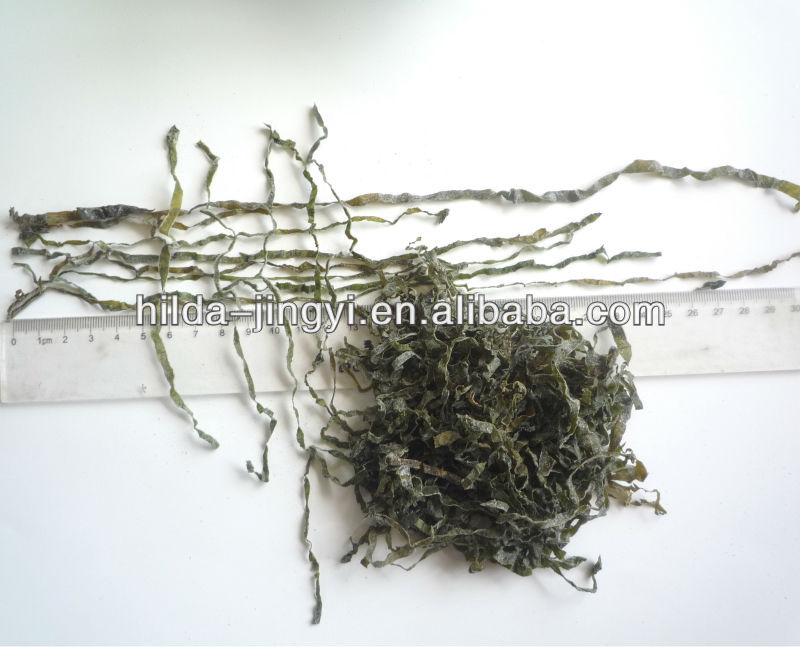 Machined dried cut seaweed laminaria kelp in China