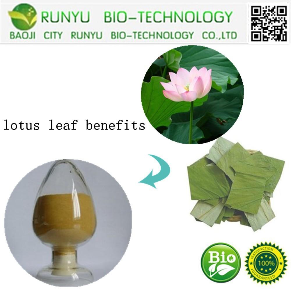 Lotus leaf benefits lotus leaf benefits suppliers and manufacturers lotus leaf benefits lotus leaf benefits suppliers and manufacturers at alibaba izmirmasajfo Images