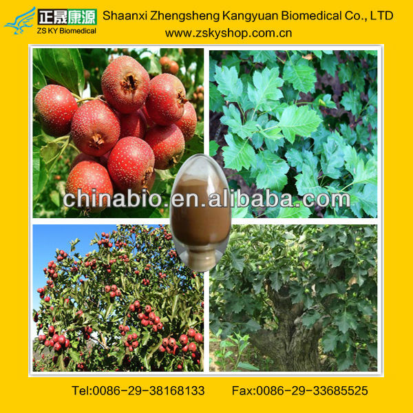GMP factory supply good quality Hawthorn leaf extract&Hawthorn berry extract