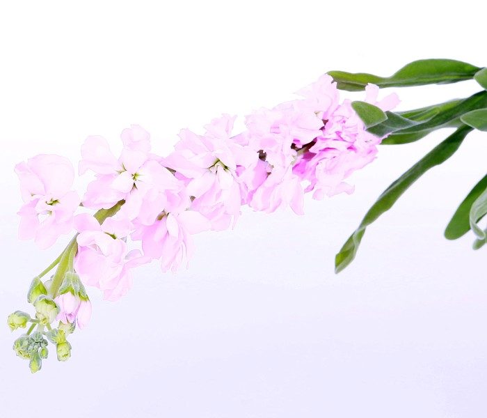 Different types pink flowers different types pink flowers suppliers different types pink flowers different types pink flowers suppliers and manufacturers at alibaba mightylinksfo