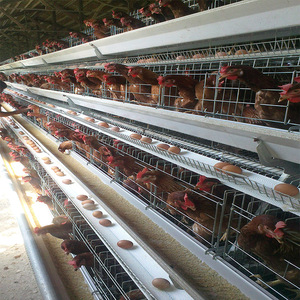 Factory high-quality production of new design chicken layer a frame layer cage in india
