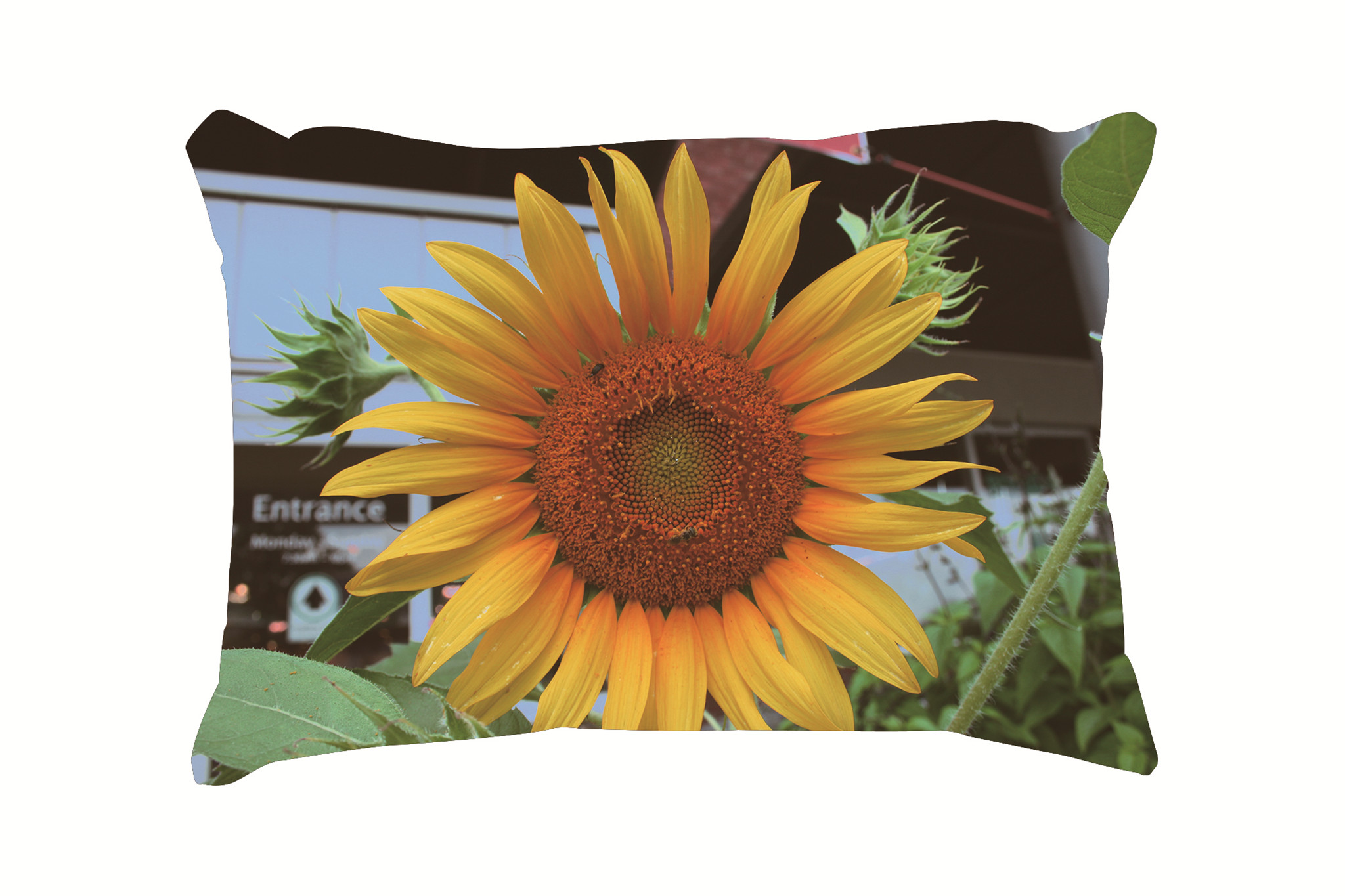 Compare Prices On Sunflower Pillow Cases Online Shopping