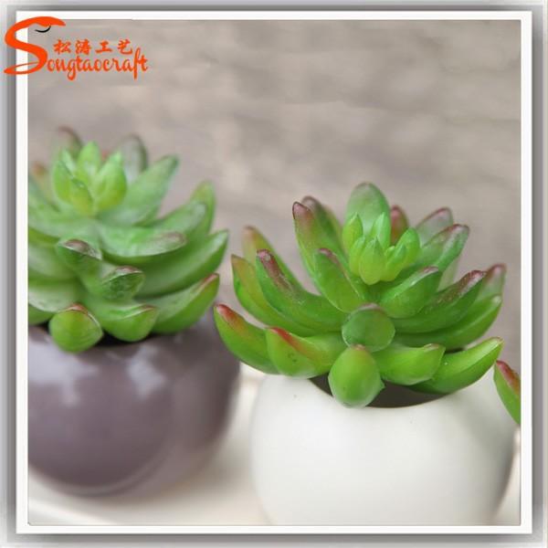 plantes artificielles succulentes gros succulentes petits. Black Bedroom Furniture Sets. Home Design Ideas