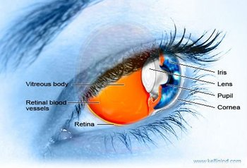 Ophthalmology Image