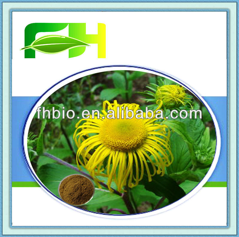 Best Quality Natural Flos Inulae P.E.