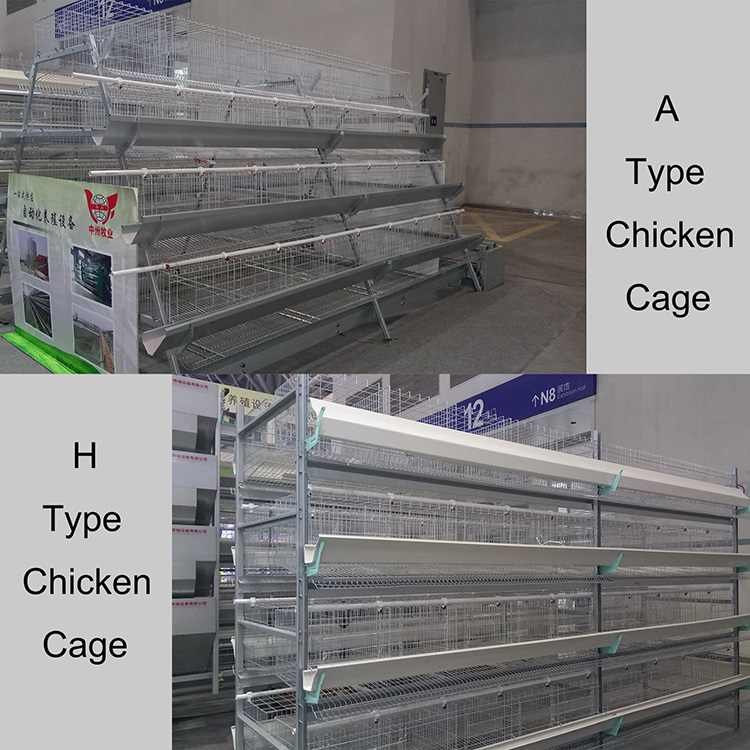 Automatic equipment with hot dipped galvanized chicken cage used in modern poultry farm for sale
