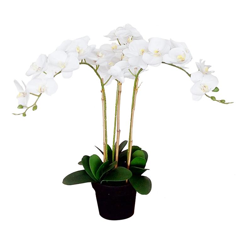 Venta Al Por Mayor Colorear Flores Y Arboles Compre Online Los