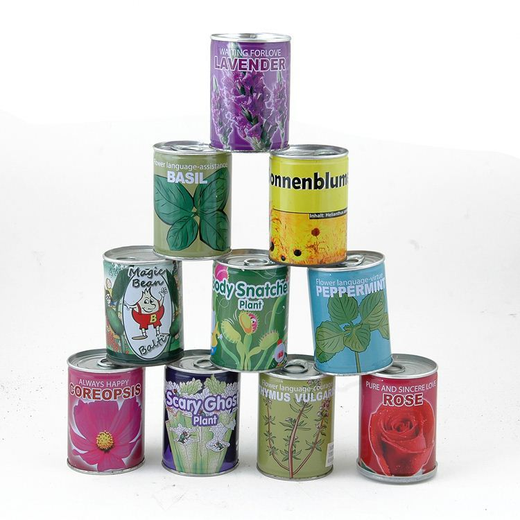 Hot Sale tropical house garden plants in tin cans