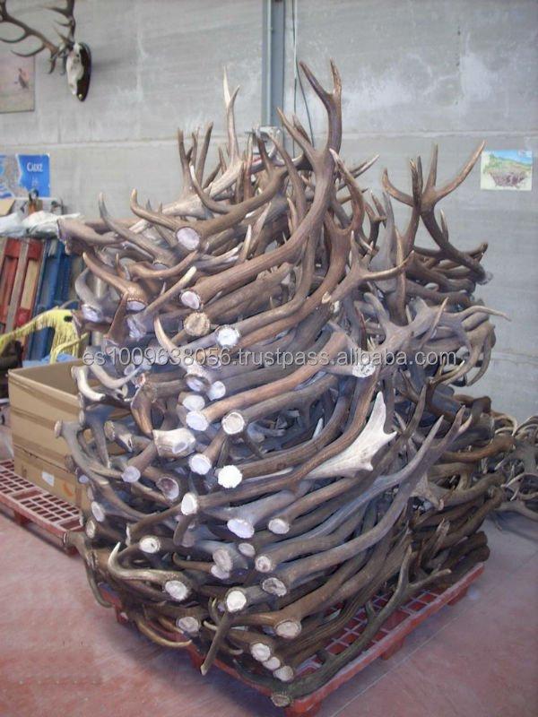 Red Deer Antlers Supplieranufacturers At Alibaba