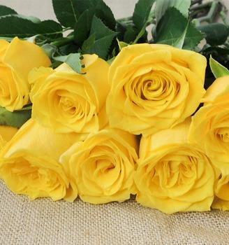 Beautiful Yellow Roses Wholesale Mens Export Fresh Cut Rose Flowers