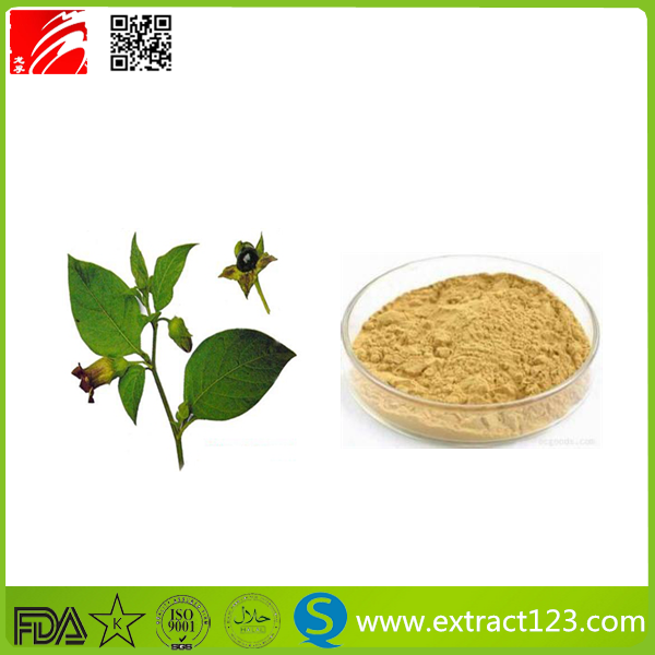100% Natural Atropine Belladonna Extract Scopolamine 1%