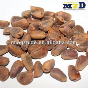 Chinese Pinenut , Pine nut kernels, Red Pine nut