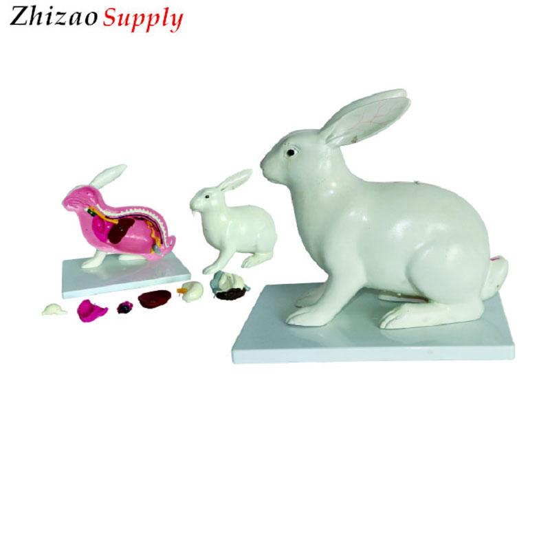 Animal Rabbit Anatomical Model,Rabbit Anatomy Model,Medical Teaching ...