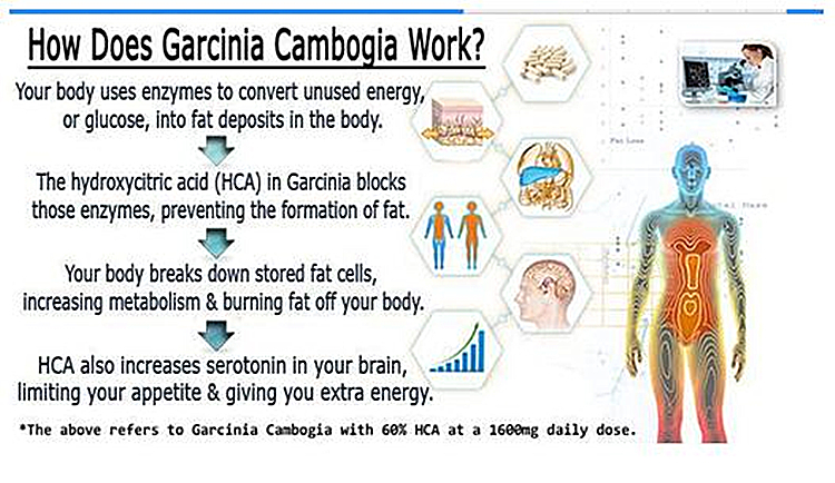 Garcinia cambogia extract hydroxycitric acid HCA 60% for loss weight natural ingredient