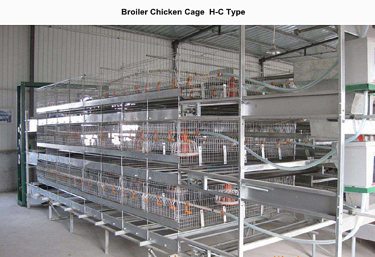 poultry equipment for broiler