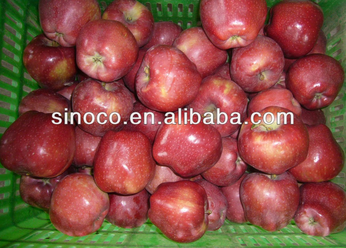 Buy chinese custard apple fruit from china in China on Alibaba.com