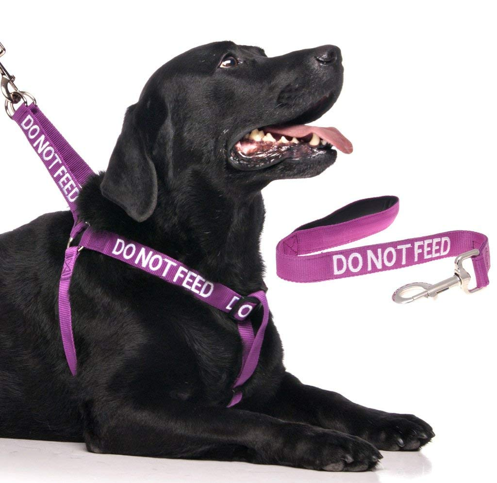 Do Not Feed Color Coded Purple L-XL Dog Harness and 2 4 6 Foot Padded Leash Sets (May Have allergies) Prevents Accidents By Warning Others of Your Dog in Advance