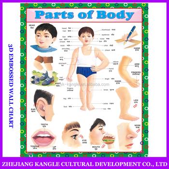 India Idioma Anatomía Educativos Murales Con Cuerpo Sistema De ...