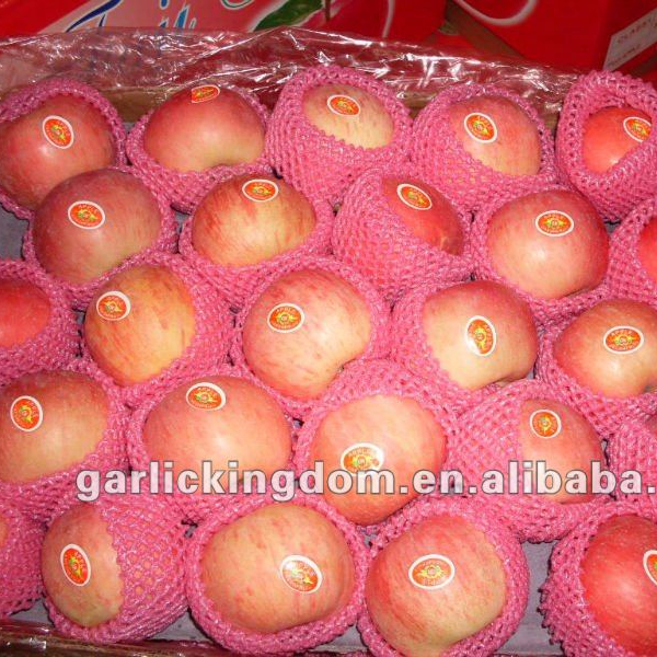 Red Fuji Apple/chinese apple fruit fresh / fuji apple