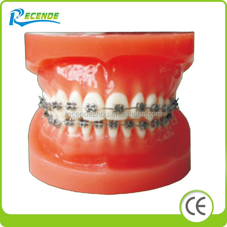 BL-3B Dental Study Model Orthodontic Model (normal, ordinary, brackets)