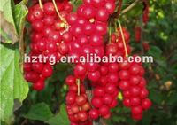 Enhance Sexual:schisandra berries p.e.