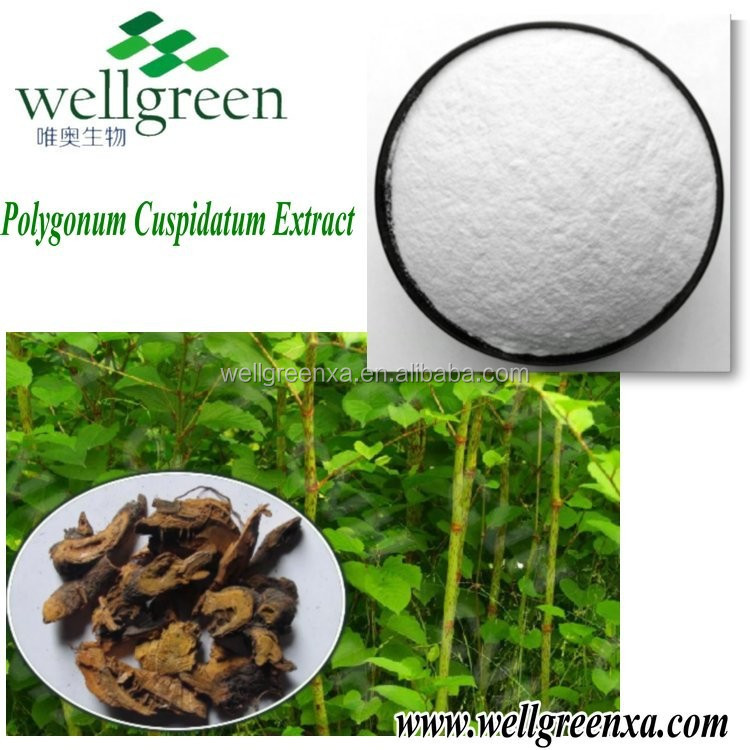 100% Natural Giant Knotweed P.E. giant knotweed extract polydatin
