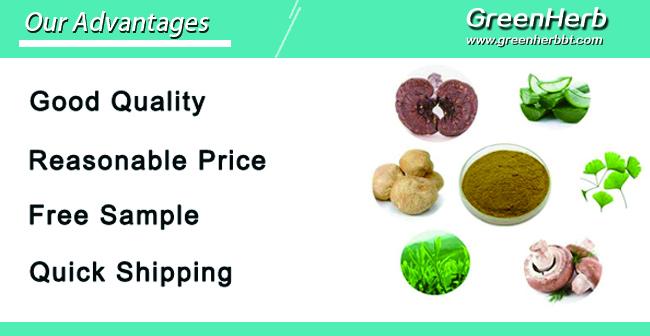 GreenHerb Fornire Puro Vegetale Naturale Estratto di Erbe di Menta Piperita 12:1 TLC Mentha Piperita Estratto In Polvere