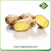 high quality Chinese mature fresh ginger price per ton