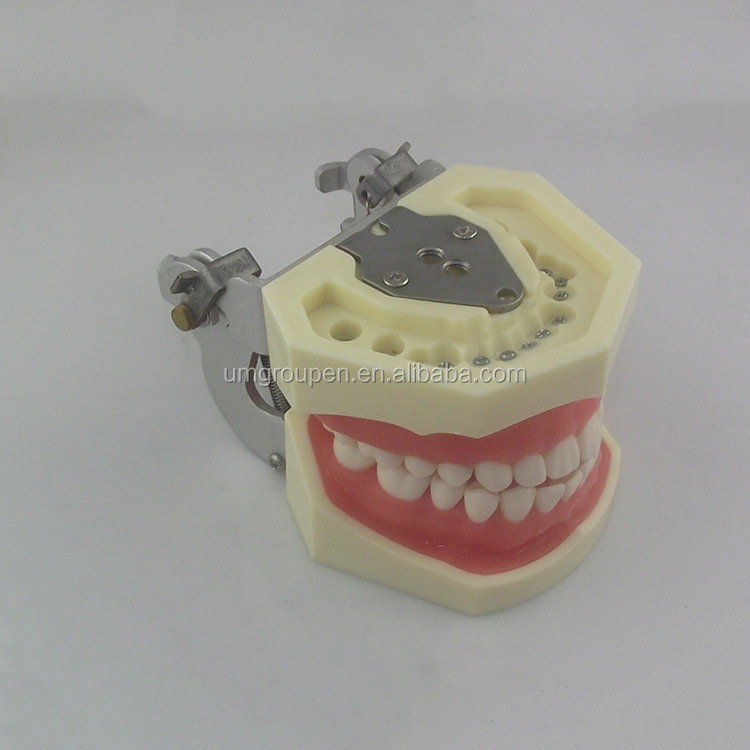 Best price superior quality lab equipment dental educational orthodontic models