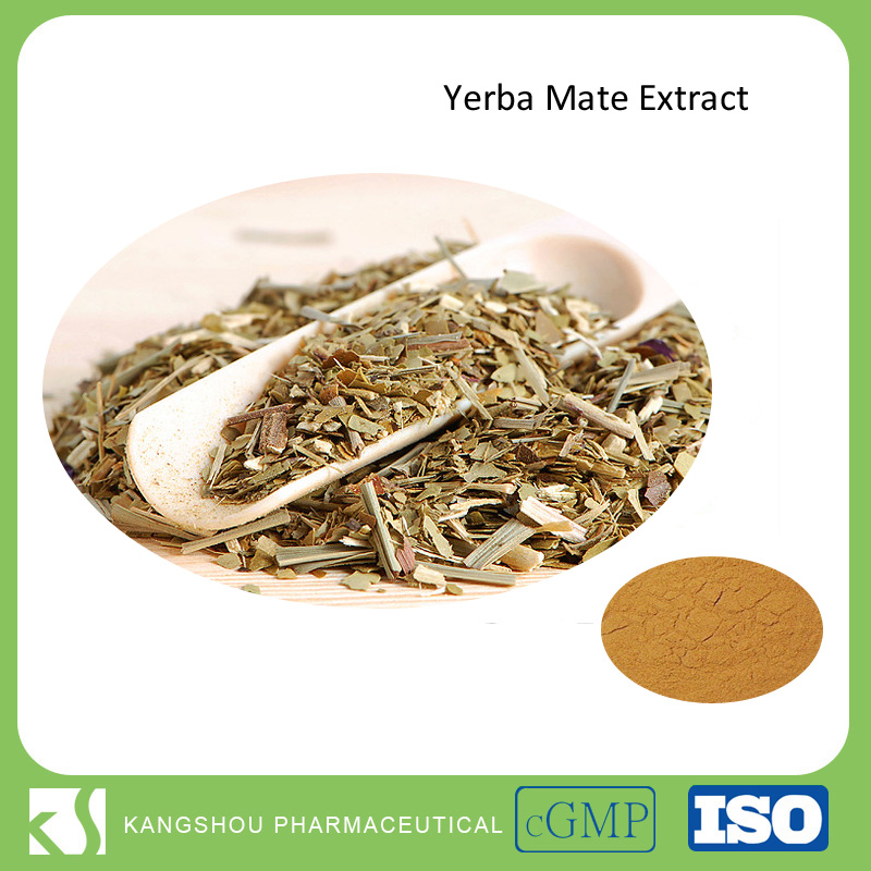 Health food Yerba Mate Extract Ilex paraguariensis leaf powder