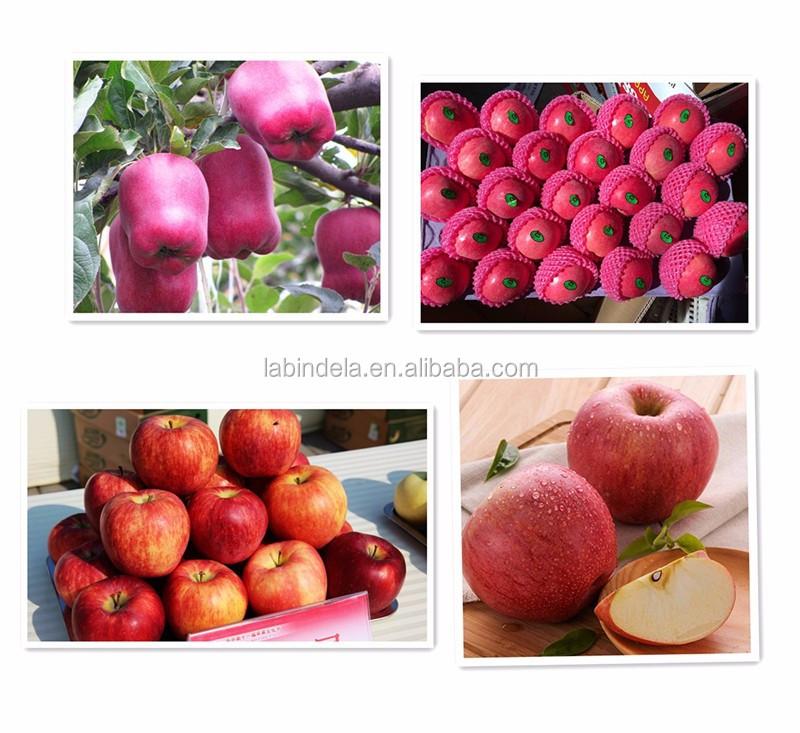 Apple Fruit Fresh / Washington Red Delicious Apples / China Fuji ...