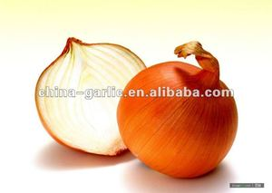 Market Price for Yellow/ Red Onion (2012 Organic Garlic)