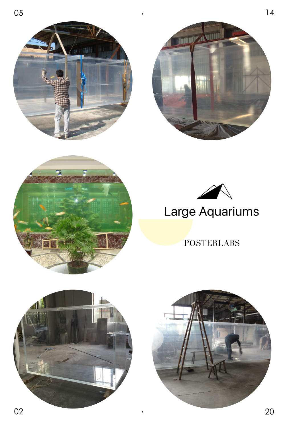 Fish for vertical aquarium - Vertical Aquarium Fish Low Price For Sale