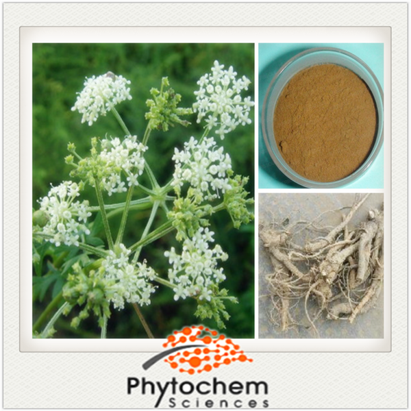 Chinese herbal Peucedanum Root Extract Angelica saponin