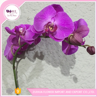 To floral shop planting base provide directly orchid plant