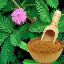 Bulk Pure Mimosa Pudica Powder Mimosa Hostilis Root Bark Powder with Best Price