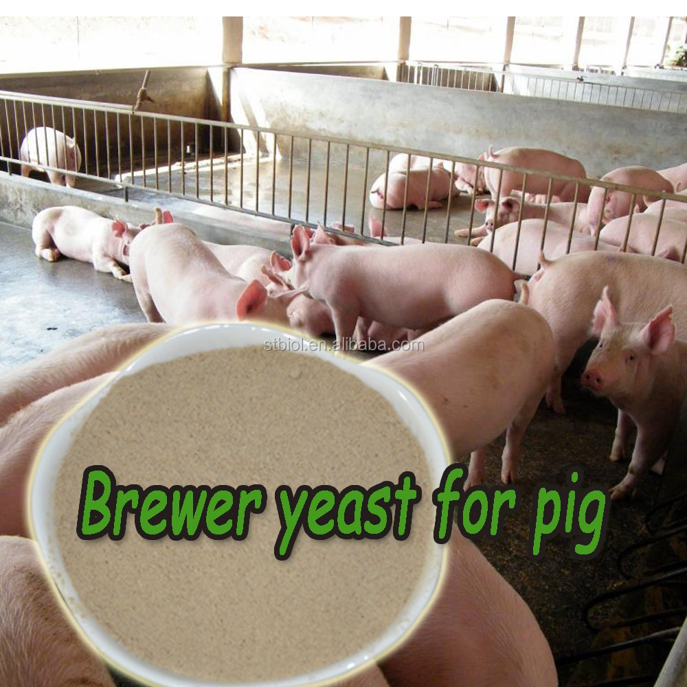 Brewer's yeast powder contain high quality protein